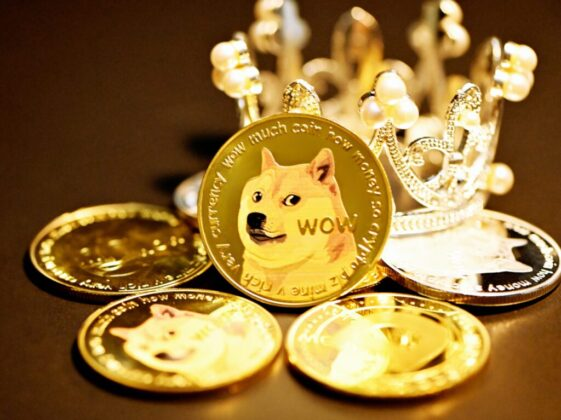 gold and white cat on round gold coins